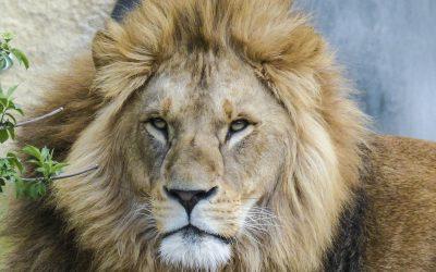 lion5602291920-1